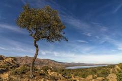 El árbol. (Amparo Hervella) Tags: manzanareselreal comunidaddemadrid españa spain nube naturaleza pueblo agua roca d7000 nikon nikond7000