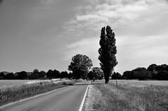 Straße nach Kirchdorf / Road to Kirchdorf (Lichtabfall) Tags: schwarzweiss monochrome poel ostseeinsel ostseeinselpoel sw blackandwhite blackwhite bw bäume trees strasse street himmel sky ostsee balticsea landstrase baum tree mecklenburgvorpommern