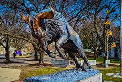 Bill the Goat on the campus of the US Naval Academy - Annapolis MD (mbell1975) Tags: annapolis maryland unitedstatesofamerica us bill goat campus naval academy md usa usn navy university college military usna universitäten universidad università université 대학 大學 universiteit universidade status sculpture
