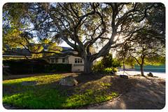 Embrace nature (alessio.vallero) Tags: berkeley california unitedstatesofamerica us tree nature wide angle gm sony