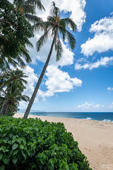 North Shore (tcmealy) Tags: oahu hawaii north shore nikon d7200 tokina travel beach palm tree pipeline