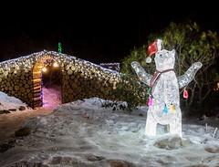 Polar Bear (Karen_Chappell) Tags: polarbear bear lights night garden xmas noel holiday christmas longexposure botanicalgarden stjohns newfoundland nfld snow winter december canada atlanticcanada avalonpeninsula outdoors decor decorations