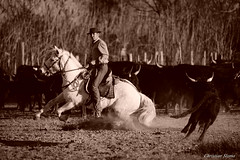 _DSC0701 (chris30300) Tags: camargue cheval