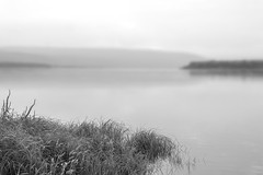 By the river (man_from_siberia) Tags: river riverside riverscape riverbank rivertom tomriver siberia monochrome bw bnw blackandwhite blackwhite река вода water grass монохром чернобелое чернобелоефото томь сибирь лето summer serenity tranquility peaceful