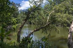 Parc Ivoloina / Парк Иволоина (dmilokt) Tags: природа nature пейзаж landscape река river dmilokt