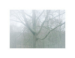 NG XXXVI ([ Time - Beacon ]) Tags: tb tree fog mist branches mood nature