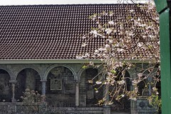 Lente in de binnentuin (Gerard Stolk (au carnaval )) Tags: delft prunus deporceleynefles
