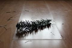 Branch Down (Epochend) Tags: christmas xmas tree branch artificial fake needles plastic floor light broken snapped