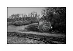 Le Morvan (Punkrocker*) Tags: nikon s2 rf rangefinder nikkor 50mm 5014 sc film kodak tmax 400 nb bwfp campagne campaign tree field landscape morvan bourgogne france
