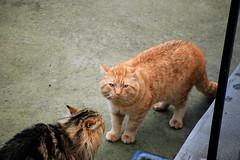 """""""She doesn't want to be my friend!"""" (HoosierSands) Tags: cat ginger ealing london"""
