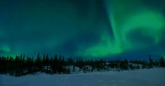 Aurora borealis (Jacques Rollet (Little Available)) Tags: night nuit snow neige tree arbre auroraborealis winter hiver groupenuagesetciel