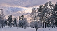 Winter wilderness (somabiswas) Tags: winter wilderness sognsvannet sognsvan lake frozen snow trees travel oslo norway