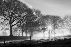 The Earth says 'Hello' (Julia Martin Photography) Tags: juliamartinphotography photographybyjuliamartin monochrome blackandwhite frost mist hff sunrise