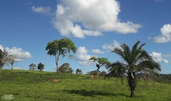 Puro verde... (alordelo) Tags: viagens travel clouds landscape nature bahia céu brasil brazil paisagens color cores azul nuvens verde natureza sky green blue arvore ilovenature estrada tree trilhas visual pénaestrada offroad contraluz rodoviabr101 rodoviaba120 kodak alordelo lordelo