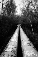 (Follow the) Pipelines (Pascal Volk) Tags: berlin wartenberg berlinlichtenberg fernwärmetransportleitung pipeline fernleitung transporteportubería woodland waldgebiet bosque floresta spring frühling primavera artinbw schwarz weis black white blackandwhite schwarzweis sw bw bnw blancoynegro blanconegro canoneosr canonrf35mmf18ismacrostm 35mm dxophotolab ilfordpanfplus50 dxofilmpack