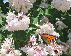 allemagne Bavière (Micheline Canal) Tags: allemagne bavière landscape paysage foret fleur animal maison papillon