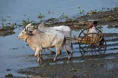 MYANMAR - AMARAPURA (1574) - U Bein Bridge (eso2) Tags: amarapura asia myanmar birmania
