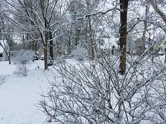 snow (army.arch) Tags: snow