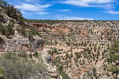 20180606 Grand Canyon National Park (94).jpg (spierson82) Tags: hike landscape canyon nationalpark trail grandcanyon brightangeltrail vacation arizona summer grandcanyonnationalpark grandcanyonvillage unitedstates us