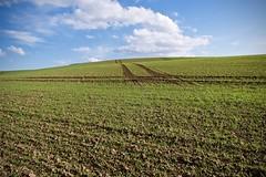 agriculture au Cap gris-nez (pierre.pruvot2) Tags: panasonic lumix gx80 france pasdecalais capgrisnez agriculture minimalisme sillons graphisme champs