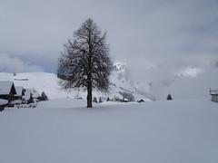 Wirzweli (Priska B.) Tags: wirzweli nidwalden innerschweiz himmel wolken schnee april frühling nebel baum berg zentralschweiz schweiz switzerland swiss svizzera wiesenberg