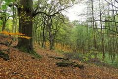 Herbstwald (Evan_1980) Tags: uckermark boitzenburg tiergarten strom wald herbst