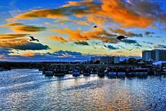 Entardecer em Quarteira/Algarve (Zéza Lemos) Tags: quarteira algarve água areia aves ave asas portugal praia puestadelsol pordesol mar portodeabrigo portodepescas canon céu capture contraluz ciel natur nuvens núvens natureza barcos gaivotas