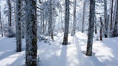 enchanted forest (jtr27) Tags: dscf4609xl jtr27 fuji fujifilm xt20 xf 1855mm f284 rlmois enchanted hike hiking mount mountain whitemountains newhampshire nh newengland winter starrking waumbek