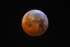 Lunar Eclipse 21 January 2019 (Gwenael B) Tags: lunareclipse eclipsetotale eclipse eclipse2019 lune lunerousse skywatcher evostar80ed 80ed astro astronomie astrophoto astrophotography universe lunaire bloodmoon couleurs red