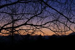 at Yachiho Highland, Nagano prefecture (yasushiinanaga) Tags: yachihoplateau naganoprefecture japan sunrise bluehour branch lightandshadow colors canoneos6d ef2470mmf4lisusm 70mm