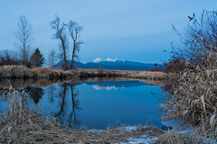 Alouette River (Sworldguy) Tags: winter snowcapped mountains alouetteriver mapleridge dyke transcanadatrail reflections snow frozen cold weather grassland trees sonya73 landscape canada britishcolumbia lowermainland bc