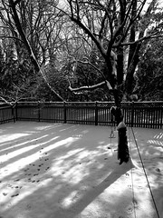backyard b&w (karma (Karen)) Tags: baltimore maryland home backyard snow shadows shadowplay trees fences mono bw hss cmwd