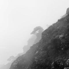Lone trees 2 (Chamikajperera) Tags: