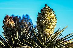 (Joshua Wells Photography) Tags: canon desert cactus cacti canoncamera t4i canont4i 5d teamcanon landscape mountains mountain arizona az photography canonlens birds
