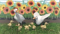 JIAN Pekin Ducks & Sunflowers (Belle. March '19) ([JIAN]) Tags: secondlife mesh animals companions wanderers duck duckling ducks sunflower flower jian