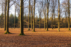 Light in the forest (jan.vd.wolf) Tags: leusden utrecht nederland nl forest wald bos bladeren boom licht light trees tree leaf leaves nature landscape forêt lumière arbres feuille darbre feuilles paysage landschap natuur landschaft natur
