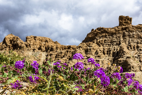 Badass Borrego Badlands and Beautiful Blooms