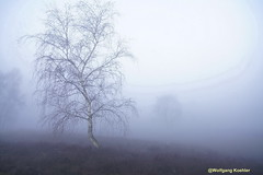 Foggy morning....! (elbigote1946) Tags: heidelandschaft heath fog niebla mist earlymorning trees mystic longexposure birch birke elabedul nebel