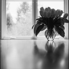 flowers - Film Hasselblad (Photo Alan) Tags: table flowers jar w3ater water reflection blackwhite blackandwhite monochrome bw film filmcamera filmscan film120 filmhasselblad hasselblad hasselblad503cw