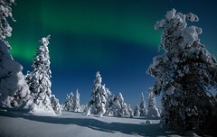 Magic in the Sky (MrBlackSun) Tags: winter aurore aurora sky nightsky stars finland winterwonderland nikon d850 nature riisitunturi national park riisitunturinationalpark