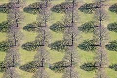 Trees In A Row - 03 (Aerial Photography) Tags: by m obb 10042009 1ds27563 baum baumpflanzung baumreihe bavaria bayern braun bäume deutschland farbe fotoklausleidorfwwwleidorfde fotoklausleidorfwwwleidorfaerialcom germany grafik grün laubbaum linde lindenbaumreihen luftaufnahme luftbild munich münchen neuersüdfriedhof ordnung p1 perlach reihen schatten schwarz aerial black brown color colour deciduoustree foliagetree graphicart graphics green leaftree lime lineoftrees negro order outdoor rowoftrees rows shade shades shadow shadows tree treeplantation trees verde deutschlandgermany deu