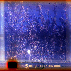 blossom (pho-Tony) Tags: 126 bencinicomet126x bencini comet x plastic italy italian instamatic 28mmx28mm square cartridge expired fuji fujicolor tetenal c41 degraded deteriorated