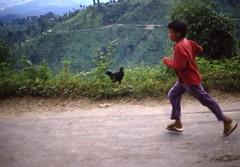 Darjeeling region (Paolo Levi) Tags: darjeeling westbengal india race canon ftb fd 50mm ilfochrome