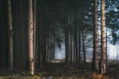 February II (der_peste (on/off)) Tags: woods woodland forest path trees mood moody mist fog forrest forestpath lurky spooky sombre