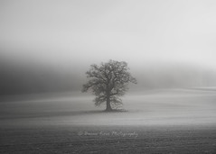 Alone In The Mist (.Brian Kerr Photography.) Tags: cumbria landscapephotography lakedistrict edenvalley mistymorning tree photography briankerrphotography winter mono blackandwhite outdoorphotography availablelight nikon d850 formatthitech vanguarduk