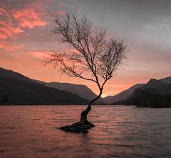 That Tree at sunrise (Camera_Shy.) Tags: llyn padarn lone tree silhouette sunrise landscape wales sky water