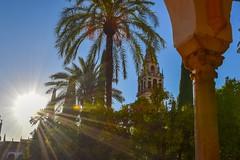Patio de los Naranjos (msamrodriguez) Tags: nature naturaleza patio cordoba andalucia garden jardin sunset atardecer goldenhour horadorada arquitecture arquitectura mezquita catedral cathedral mosque oranges naranjas