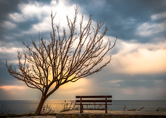 Loneliness With View (asamoal2) Tags: sea light sunset tree beauty peace beautiful landscape nature cloud dramatic romance sun outdoor outside out olympus1240pro olympus1240f28 olympusem1markii olympus