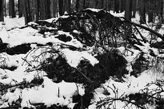 Winter (kotmariusz) Tags: snow monochrom winter 35mm poland forest las zima monochrome analog
