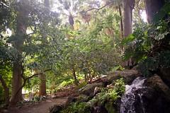 Jardín Botánico-Histórico, Málaga, Spain (AperturePaul) Tags: málaga spain europe nikon d600 garden plants botanical nature water tree trees tropical palm andalusia jardín botánicohistórico concepción